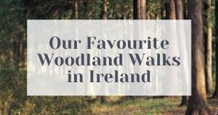 5 of Our Favourite Woodland Walks in Ireland